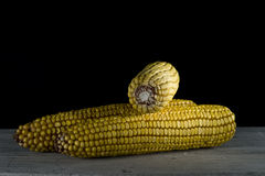 Corncobs Royalty Free Stock Image