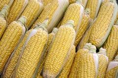 corncobs Стоковое фото RF