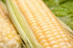 corncobs Стоковое Изображение