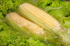 Corncobs Stock Photos