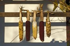 corncobs stockfotografie