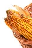 corncobs Стоковое Изображение RF