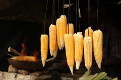 Corncobs. Hanging near a barbecue fire Royalty Free Stock Photos