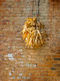 Corncobs drying Royalty Free Stock Photography