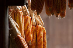 Corncobs Royalty Free Stock Photography