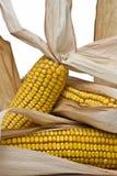corncobs ii Стоковое фото RF