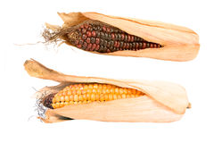 Corncobs isolated Stock Photo