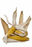 Corncobs with its skin. Royalty Free Stock Images