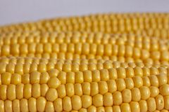 Corncobs lying side by side. Close up image. Corncobs lying side by side. Close up stock image royalty free stock image