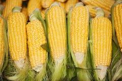Corncobs Stock Images