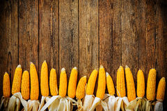 Corncobs  on rustic wooden background Stock Photos