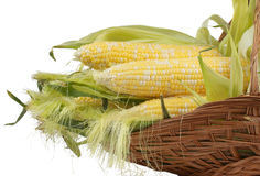 Corncobs in a wiker basket Royalty Free Stock Images