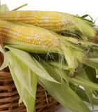Corncobs in a wiker basket Royalty Free Stock Photography