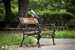 Corneille à capuchon sur un banc Image libre de droits
