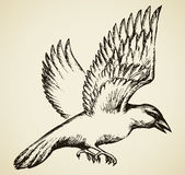 Corneille en vol Croquis de vecteur Image libre de droits