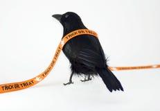 Corneille noire pour Veille de la toussaint Images stock