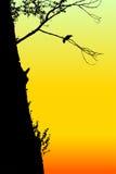 Corneille se reposant sur un arbre contre le ciel de coucher du soleil. Image stock