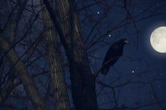 Corneille sur un arbre Photos libres de droits