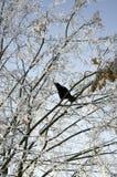 Corneille sur un arbre d'hiver Image stock