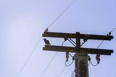Corneille sur un pylône à haute tension de l'électricité Photographie stock