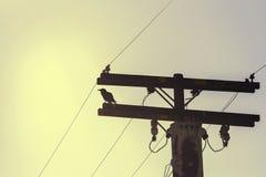 Corneille sur un pylône à haute tension de l'électricité Photographie stock libre de droits