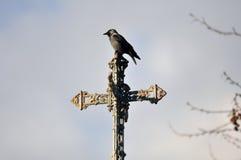 Corneille sur une croix Photos libres de droits