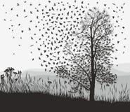 Corneilles dans une châtaigne d'arbre Photographie stock