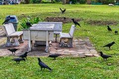 Corneilles en parc Images libres de droits