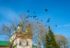 Corneilles noires, sortant de l'arbre Images stock