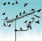 Corneilles sur des antennes de télévision Images stock