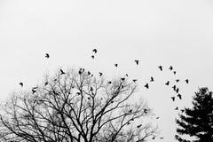 Corneilles sur l'arbre Photographie stock libre de droits