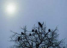 Corneilles sur les branches d'un chêne dans la forêt d'hiver image stock