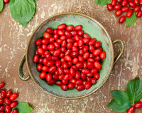 Cornel berries in green bowl Royalty Free Stock Images