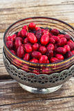 Cornel berries with herbaceous medicinal shrub Stock Images