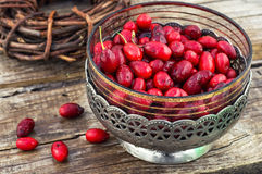 Cornel berries with herbaceous medicinal shrub Stock Image