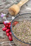 Cornel berries with herbaceous medicinal shrub Royalty Free Stock Images