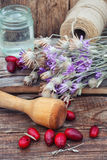 Cornel berries with herbaceous medicinal shrub Royalty Free Stock Image