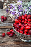 Cornel berries with herbaceous medicinal shrub Royalty Free Stock Photo