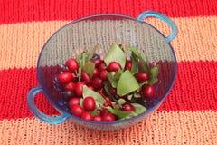 Cornel cherries Royalty Free Stock Photography