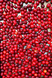Cornelian cherries berries background. Food natural background Stock Photo