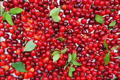 Cornelian cherries berries background. Food natural background Royalty Free Stock Photos