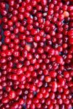 Cornelian cherries berries background. Food natural background Royalty Free Stock Image
