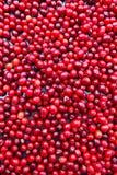 Cornelian cherries berries background. Food natural background Stock Images