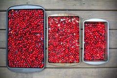 Cornelian cherries berries background. Food natural background Stock Photography