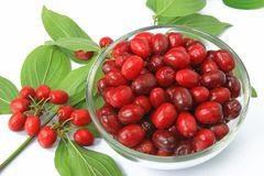 Cornelian cherries (Cornus mas) Stock Photo