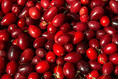 Cornelian cherries at the farmers market, close up. Food market Stock Photos