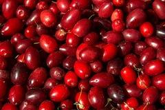 Cornelian cherries at the farmers market, close up Stock Photos