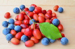 Cornelian cherries and sloes Royalty Free Stock Photography