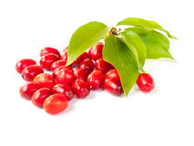Cornelian cherry Royalty Free Stock Image
