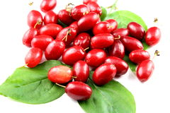 Cornelian cherry fruits isolated Royalty Free Stock Image